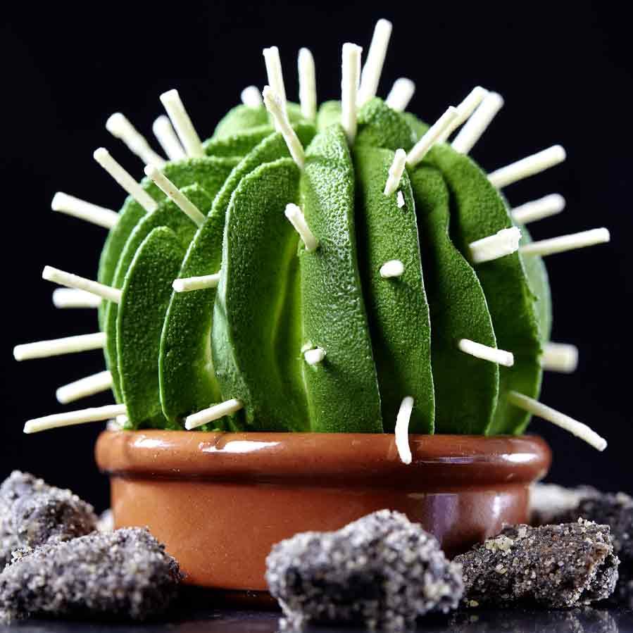 le-cactus-citron-kalamansi